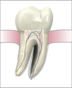 © VDW GmbH www.vdw-dental.com